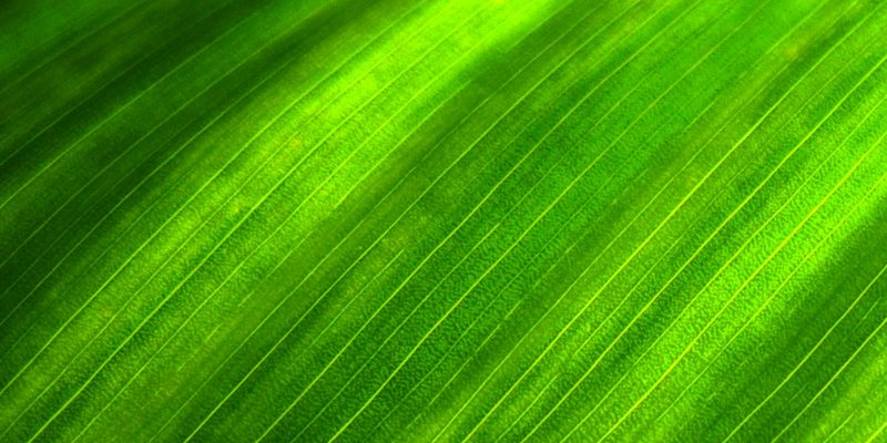 Green Leaves Background for Powerpoint