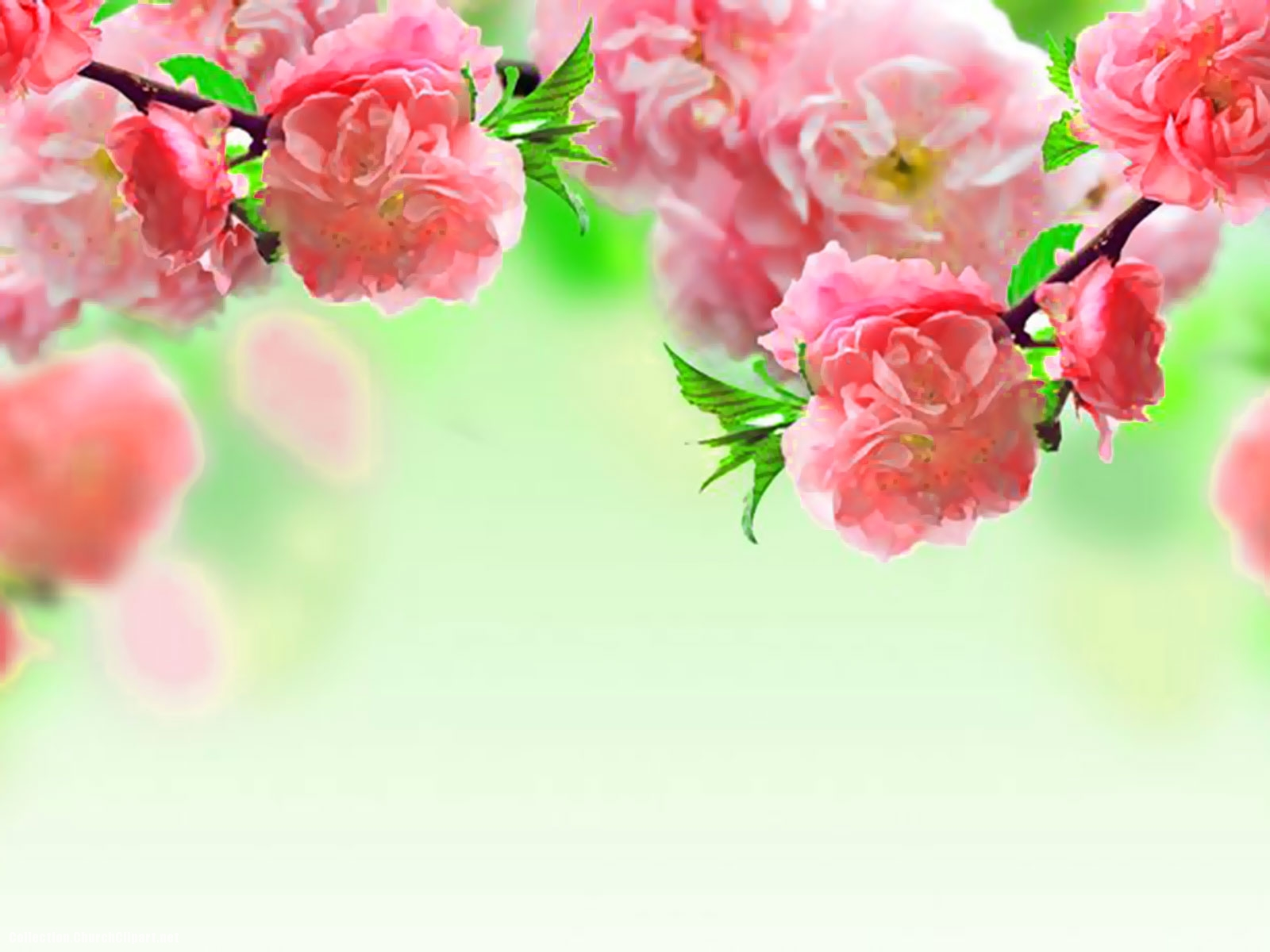 pink flower powerpoint background – background collection, Powerpoint templates