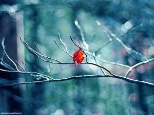 Tree Leaves Winter Season Background