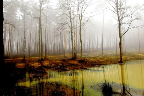 misty-forest-powerpoint-background