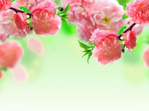 Pink Flower Powerpoint Background