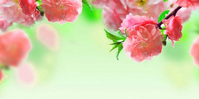 Pink Flower Powerpoint Background
