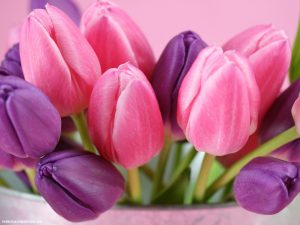 Pink Purple Tulipe Powerpoint Background