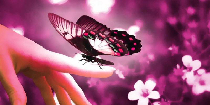 Pretty Butterfly Background