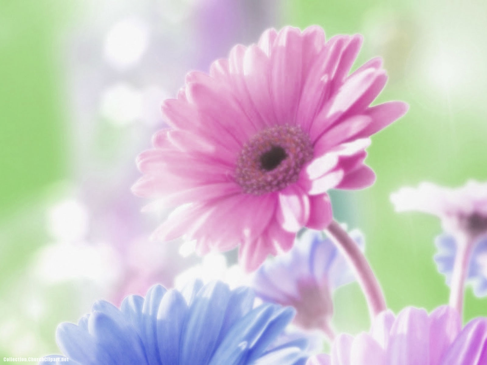 Soft Flower Background for Powerpoint