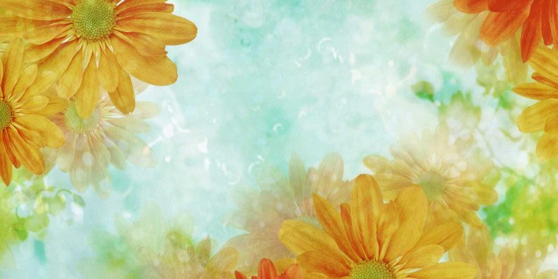Sunflower Background for Powerpoint