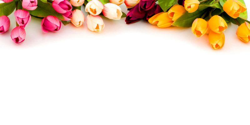 Tulipe Flower Powerpoint Background