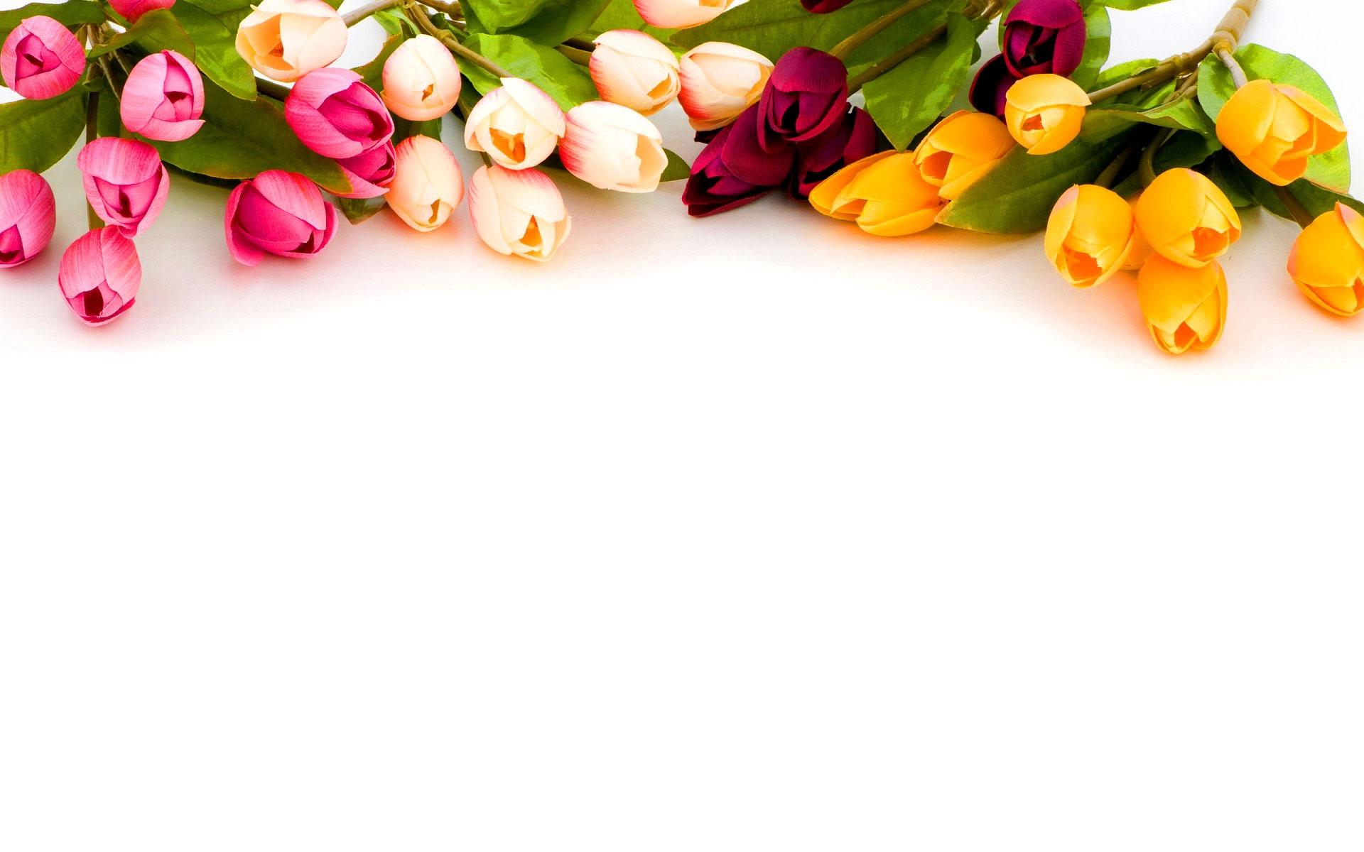 Tulipe Flower Powerpoint Background
