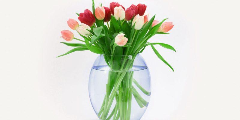 Tulips Flower In Vase Background