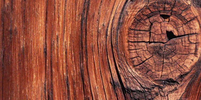 Wood Tree Background