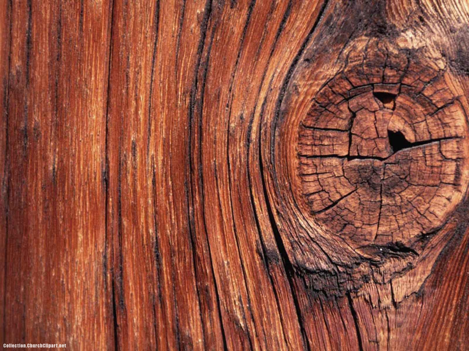 Wood Tree Background
